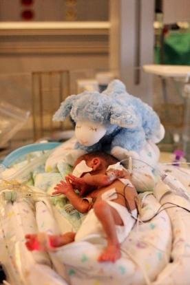 Tiny boy. Look at the blue lamb.