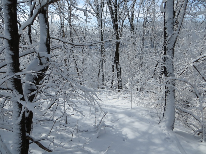 6 more inches of snow in our back woods.