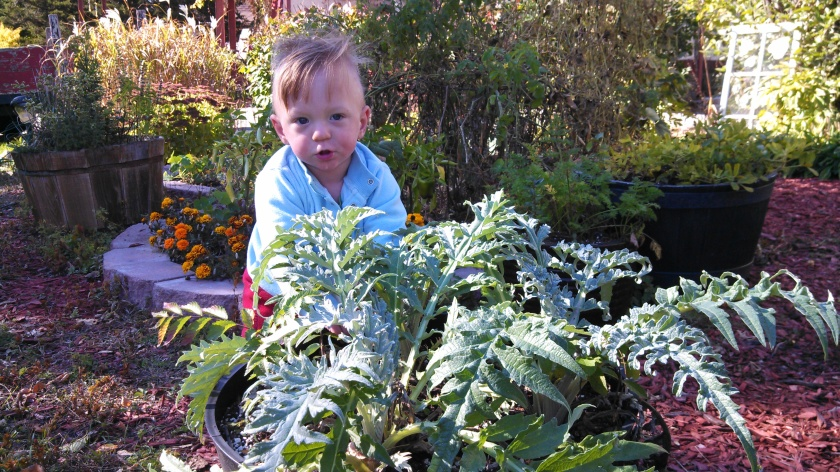 Jax hiding behind the artichokes.